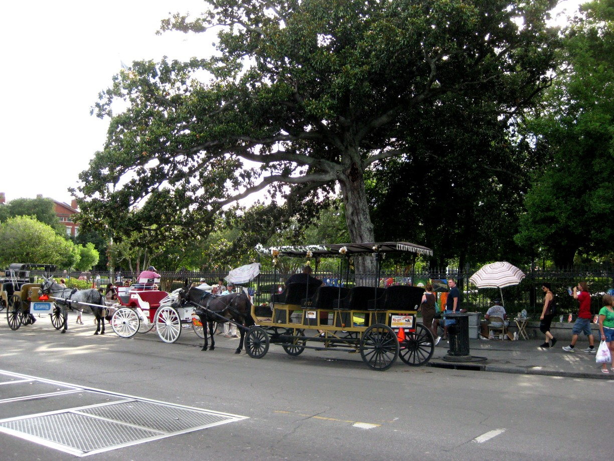 Horse and Carriage, New Orleans