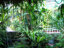 Waterfall inside the Butterfly Garden